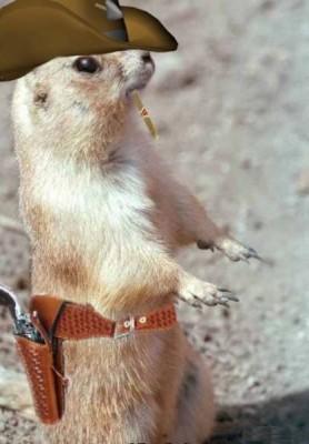 1-gun-slinger-squirrel