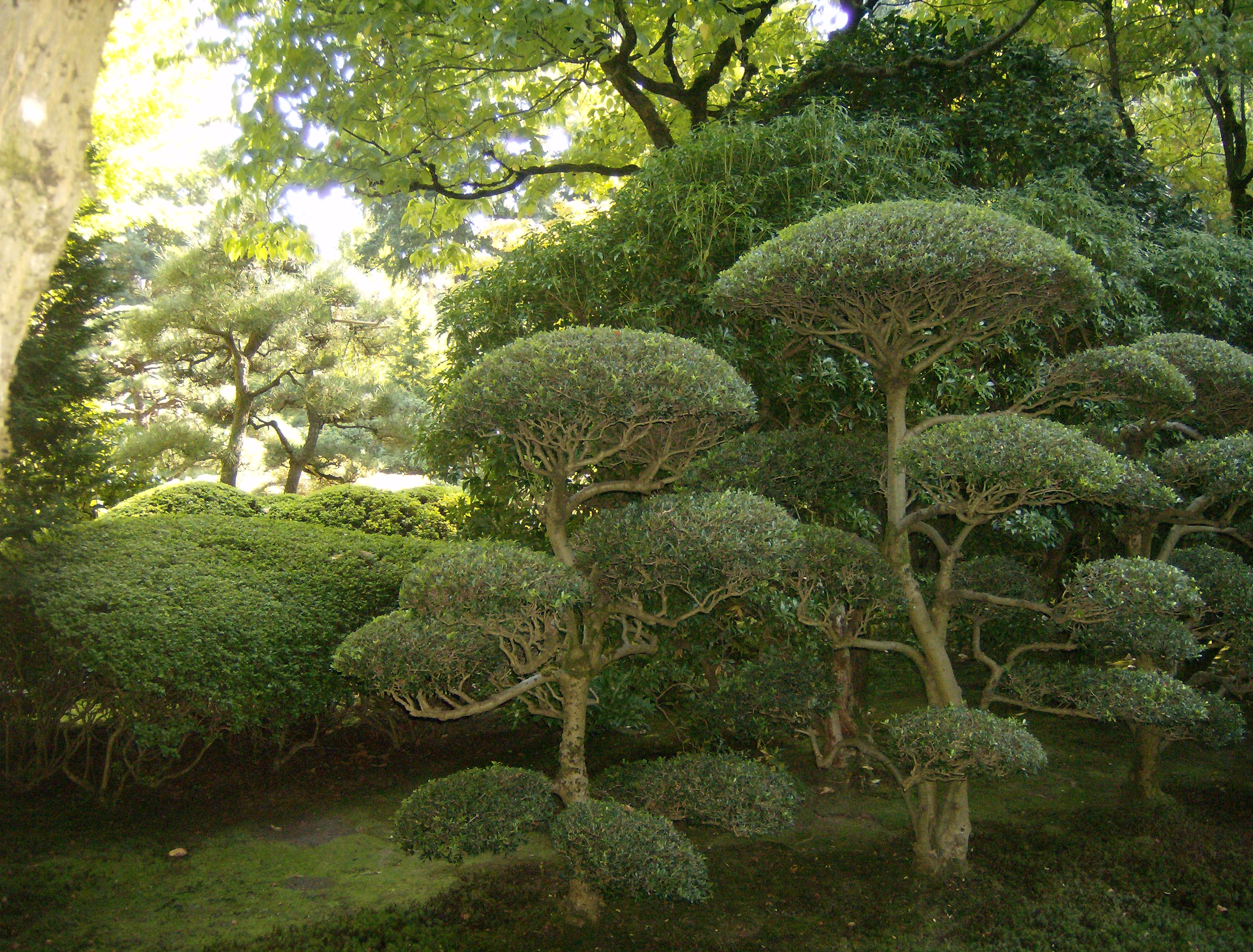 Portland oregon japanese garden plants and trees for Landscape trees