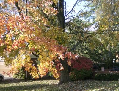Local Fall Louisville 036