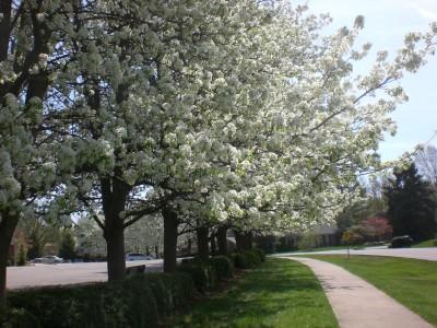 Bernheim Spring 011