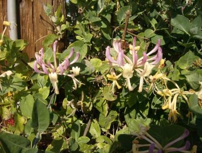 Rose Garden 067