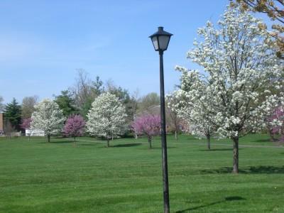 Bernheim Spring 024