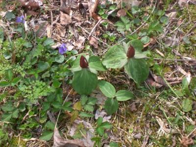Bernheim Spring 044