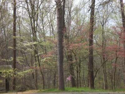 Bernheim Spring 059
