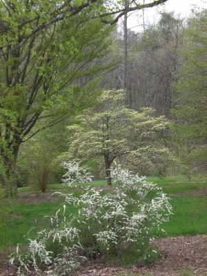 Bernheim Spring 063