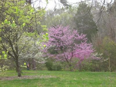 Bernheim Spring 066