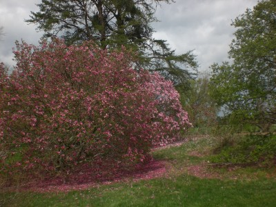 Bernheim Spring 074