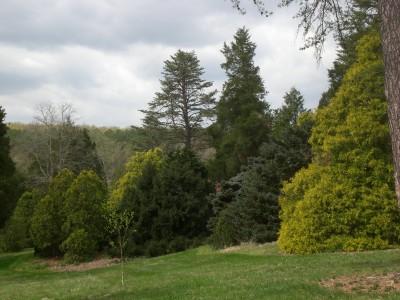 Bernheim Spring 075
