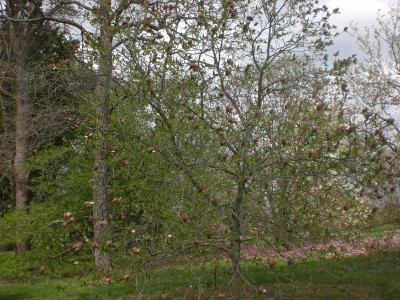 Bernheim Spring 077