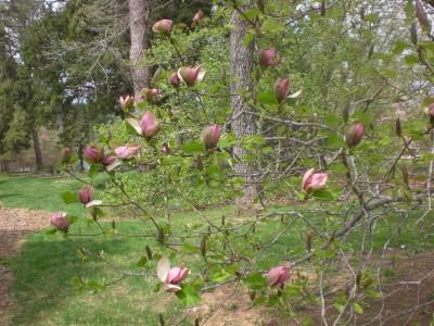 Bernheim Spring 078