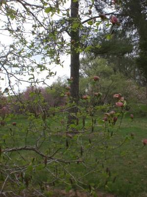 Bernheim Spring 083