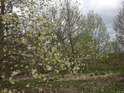Bernheim Spring 085