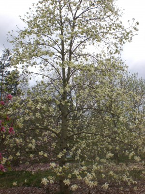 Bernheim Spring 086