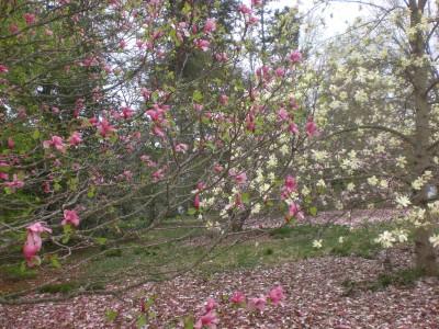 Bernheim Spring 088