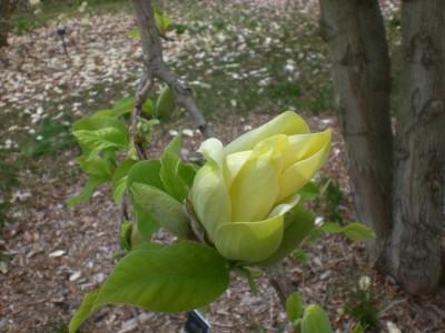 Bernheim Spring 095