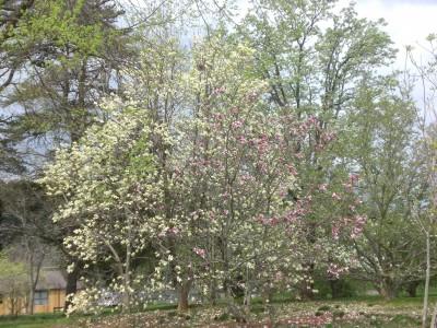 Bernheim Spring 097