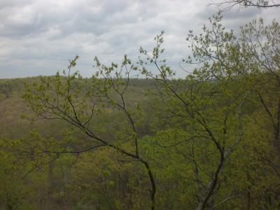 Bernheim Spring 121