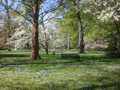 Bernheim Spring 201