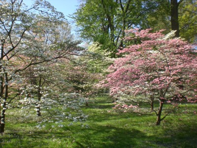 Bernheim Spring 209