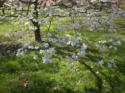 Bernheim Spring 210