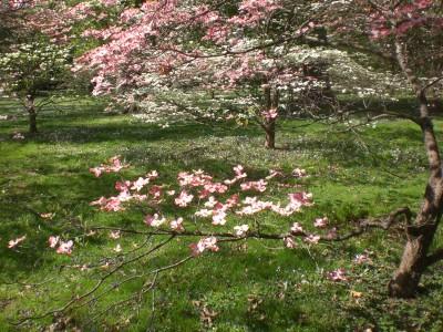 Bernheim Spring 211