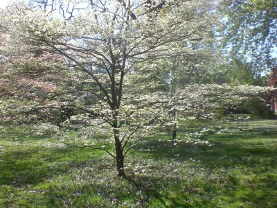 Bernheim Spring 212