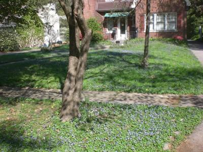 Bernheim Spring 213