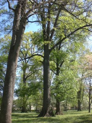 Bernheim Spring 217