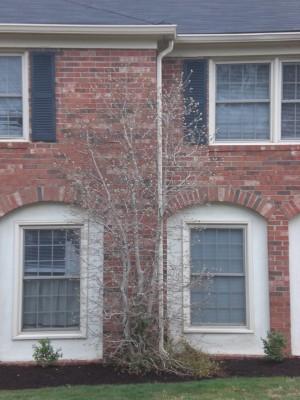 Louisville Feb '10 003