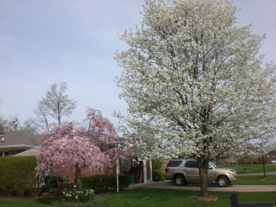 Louisville Feb '10 058