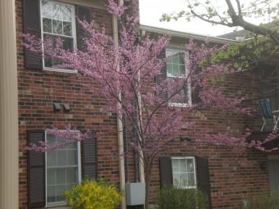 Louisville Feb '10 076