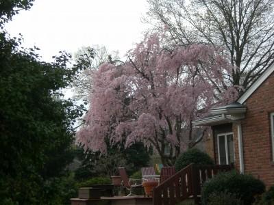 Louisville Feb '10 085