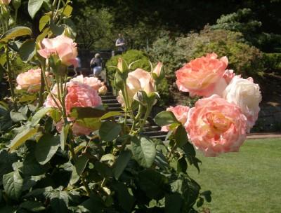 Rose Garden 010