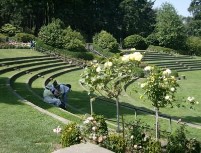 Rose Garden 016