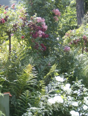 Rose Garden 031