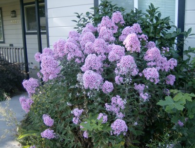 Rose Garden 059