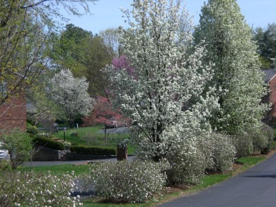 Bernheim Spring 023