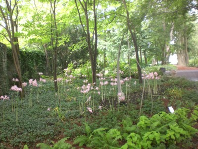 Bernheim Spring 092