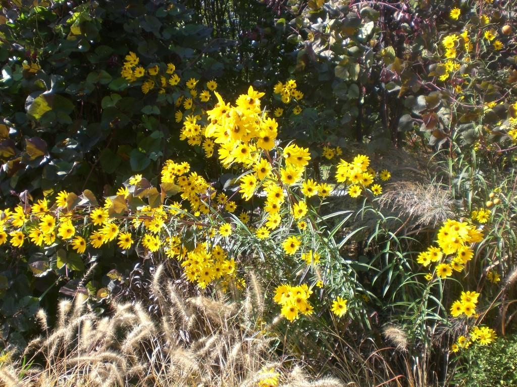 Bernheim Spring 181
