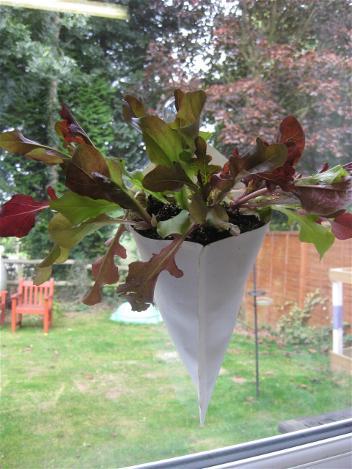 _wsb_352x469_indoor+window+vegtebles+planter