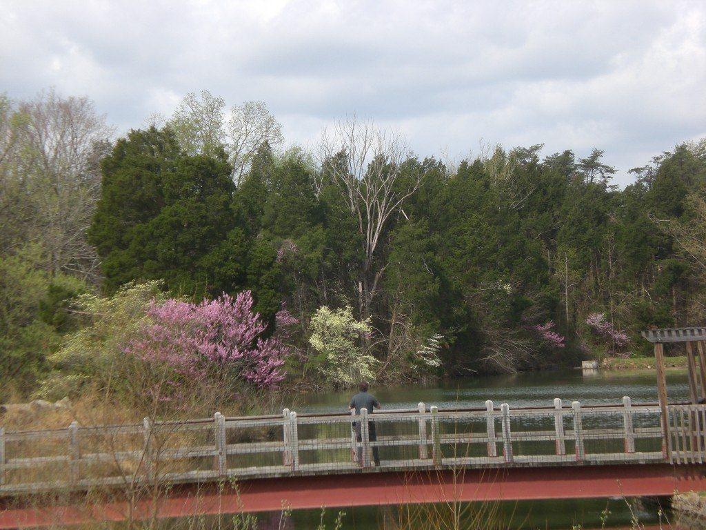 Bernheim Spring 038