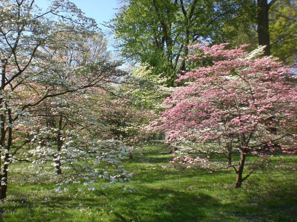 Bernheim-Spring-209