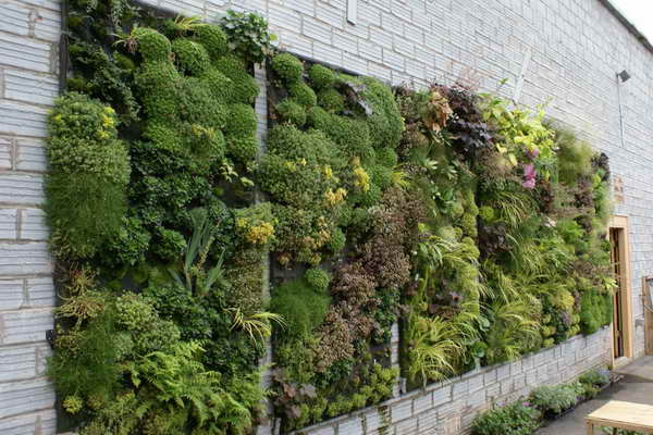 Vertical gardens | Steve Snedeker's Landscaping and Gardening Blog