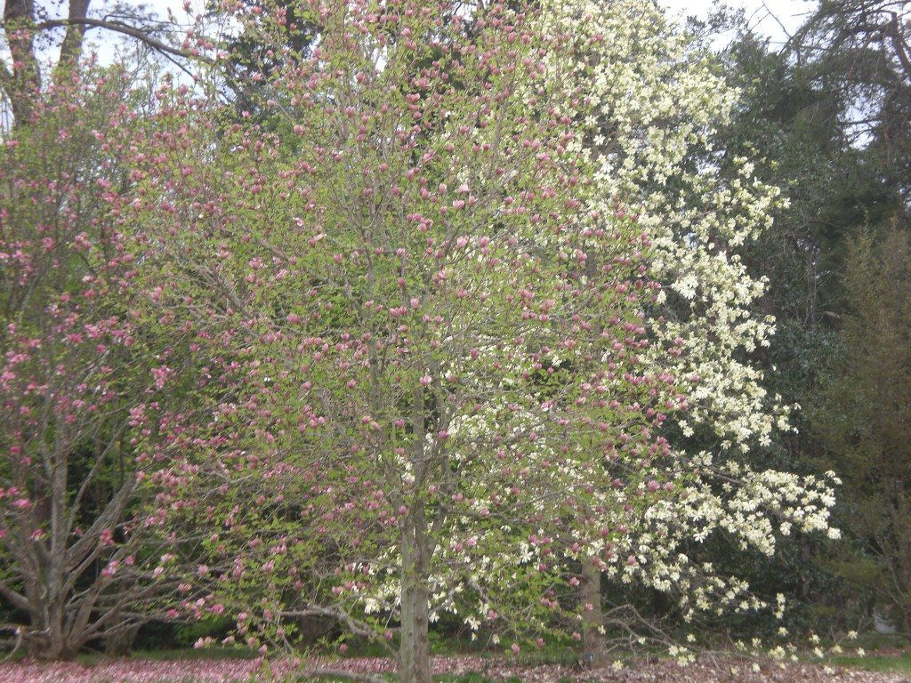 Bernheim Spring 108