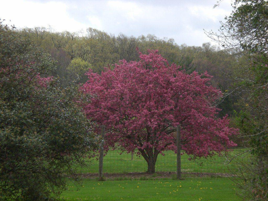 Bernheim Spring 141