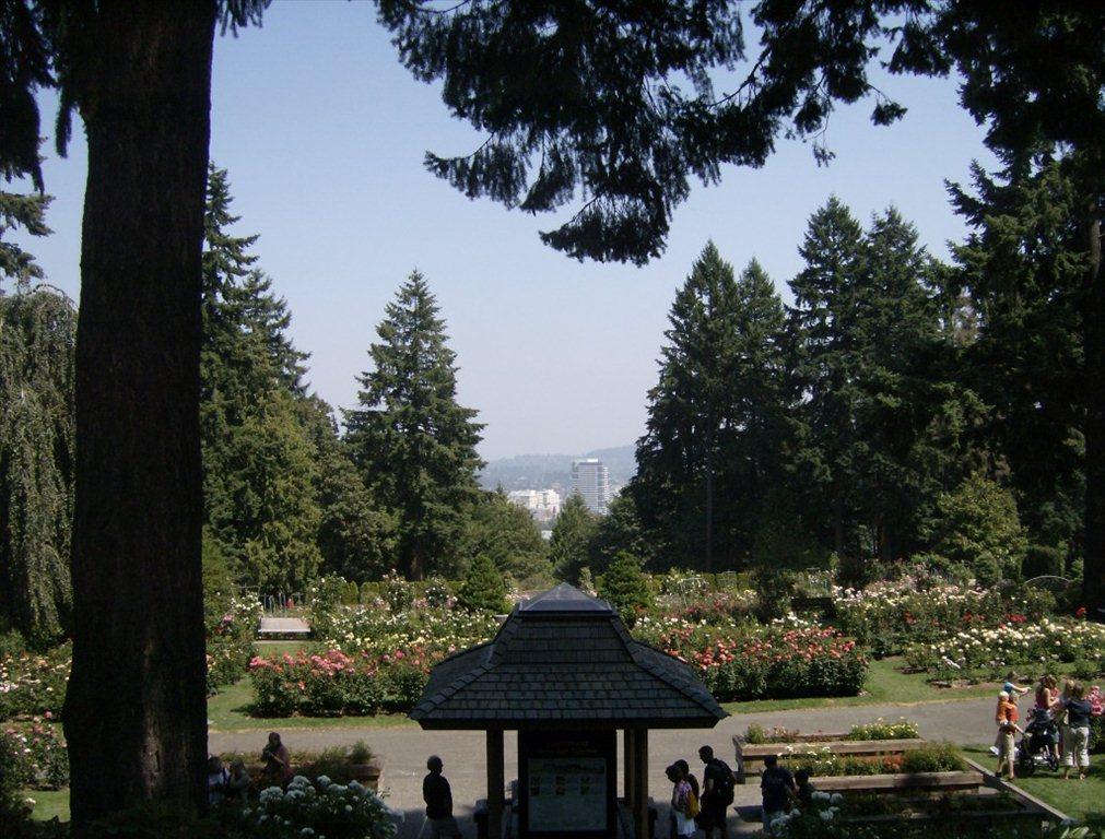 Rose Garden 106