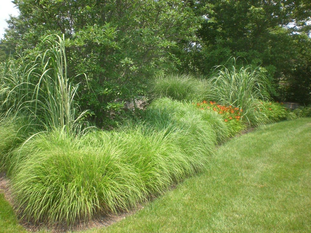 Landscape grasses constant modifications steve for Grasses for garden borders