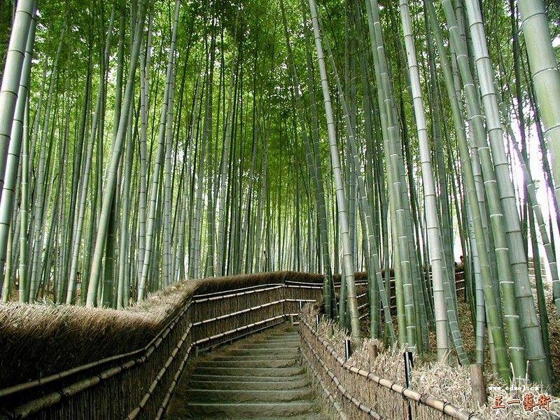 bamboo-6