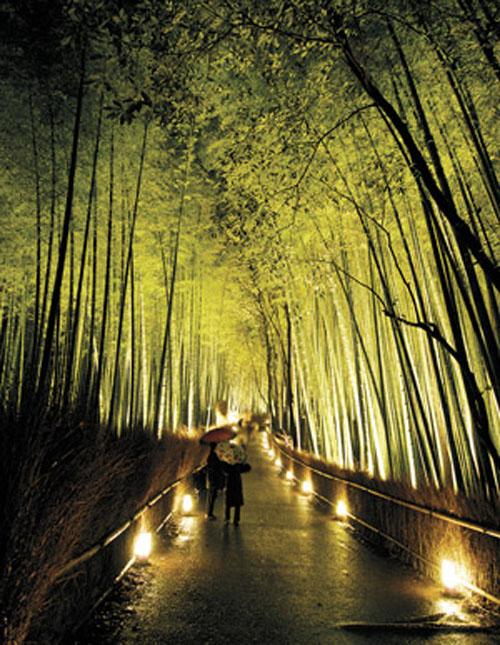 Bamboo Beauty And The Beast Steve